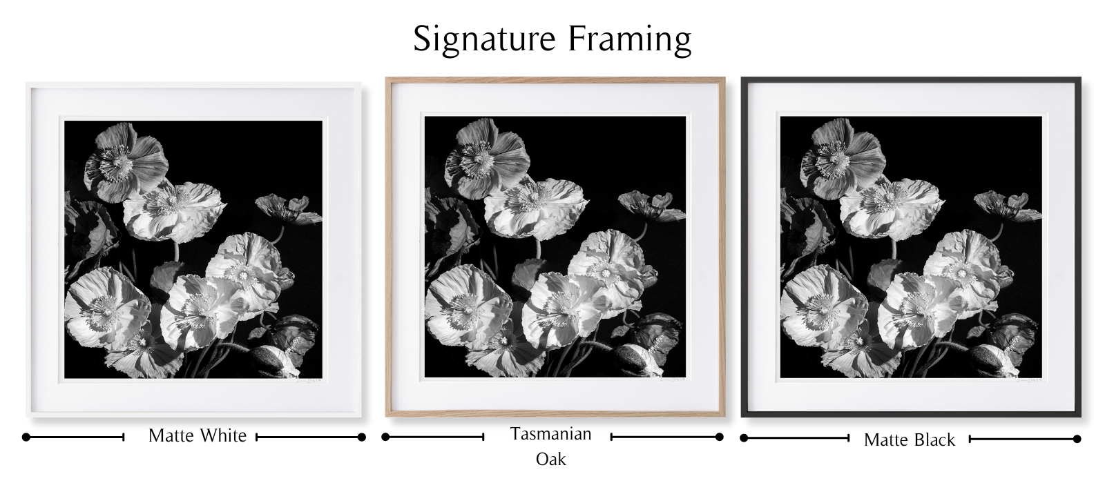 B&W Poppies by Lauren Daly | Signature Framing Style | LD Art House