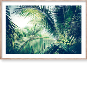 Tropical Palm #1