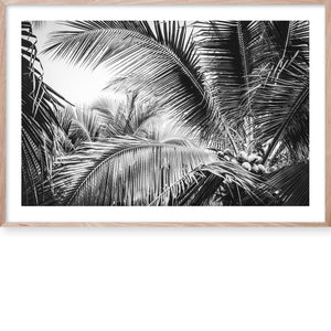 Tropical Palm B&W #1