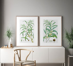 SUMMER BLOOM 2 Classic country and Hampton's style botanical wall art