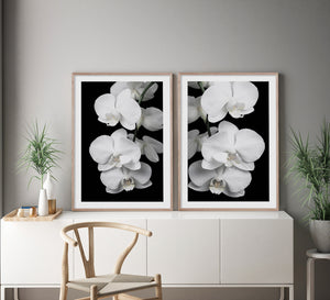 ORCHID BLISS #2 * Photographic interior wall art, fine art print
