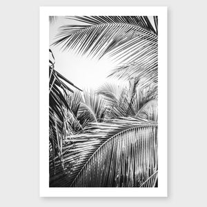 Tropical Palm B&W #2