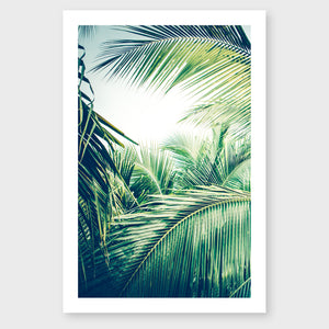Tropical Palm #2