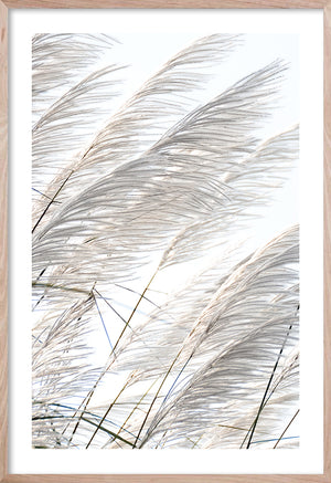 Pampas Breeze #3 * Beach Style wall art, fine art print of pampas grass