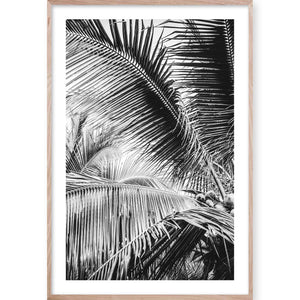 Tropical Palm B&W #3