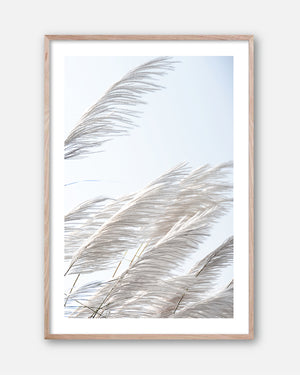 Pampas Breeze #3 * Beach Style, fine art print of pampas grass