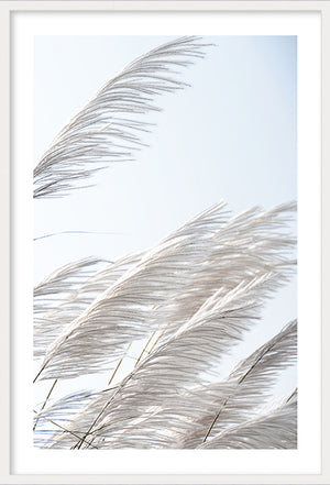Pampas Breeze #3
