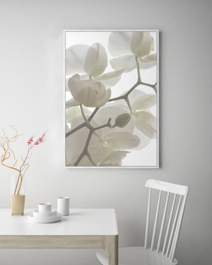 Orchid Light #3 Canvas