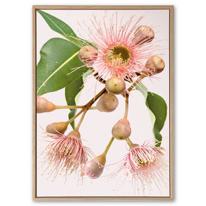 Eucalyptus Dreaming #4 Canvas