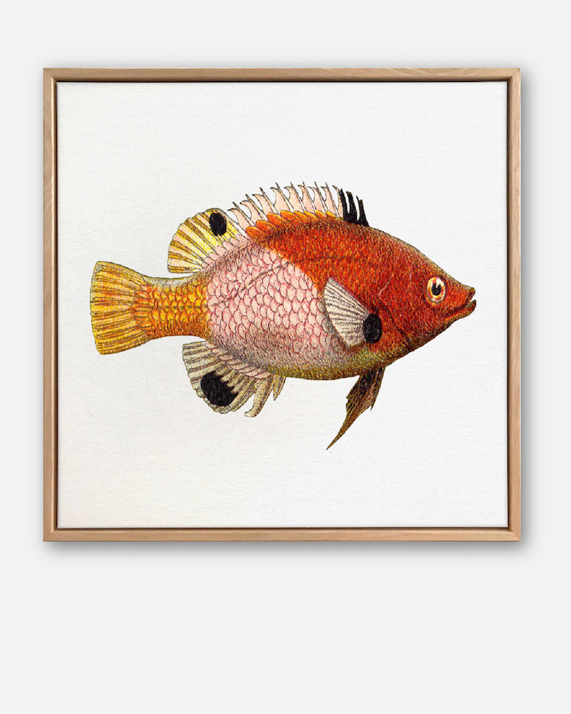 Tropical Fish Collection #5 Canvas Art | Artwork by Wall Style