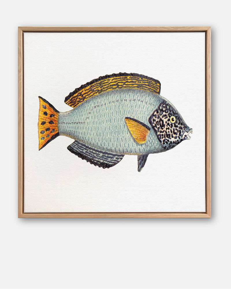 Tropical Fish Collection #6 Canvas