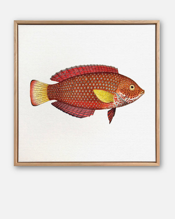 Tropical Fish Collection #8 Canvas Art | Artwork by Wall Style