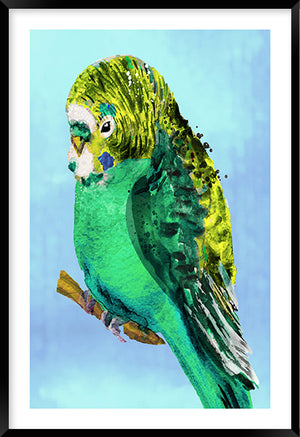 Green Budgie #2
