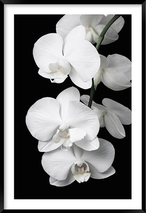 Orchid Bliss #1