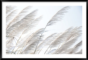 Pampas Breeze #1