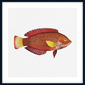 TROPICAL FISH COLLECTION #8 | Framed giclee, fine art print | Black