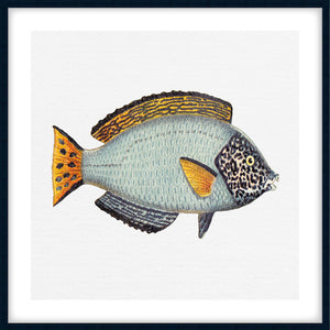 TROPICAL FISH COLLECTION #6 | Framed, giclee fine art print | Black