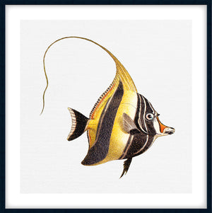 TROPICAL FISH COLLECTION #7 | Giclee, fine art, interior wall print | Black