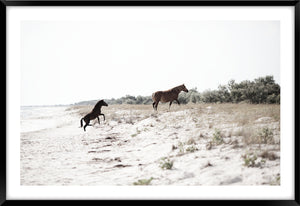 RUN FREE #1 *  Photographic archival, fine art horse print