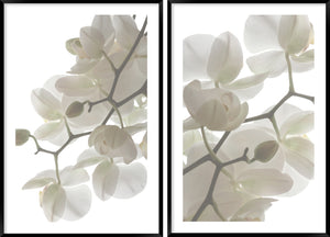 Orchid Light #2 & #3 Pair