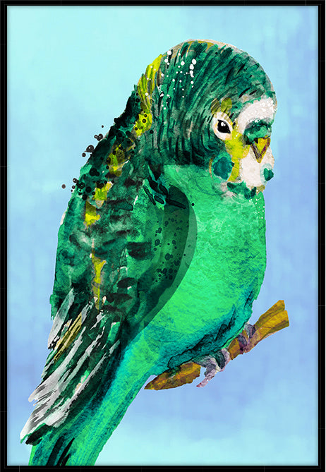 Green Budgie #1 Canvas