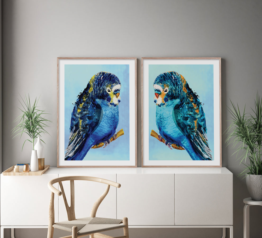 Beware of the Budgies A4 unframed print