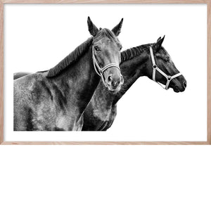 HORSE BEAUTY #1 * Contemporary, photographic, fine wall art print