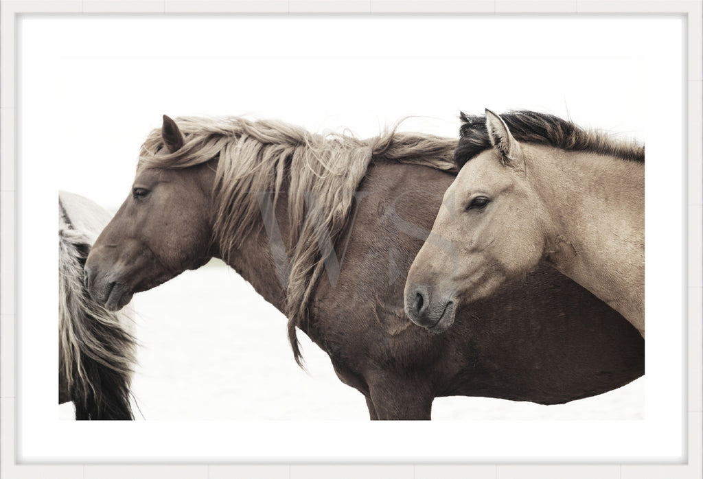 HORSE LIFE #2 * Contemporary, photographic, fine art print