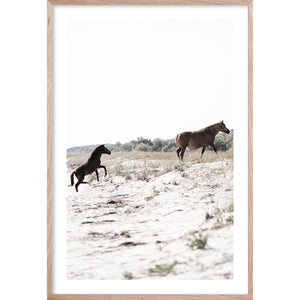 RUN FREE 2 Contemporary photographic coastal fine wall art horse print