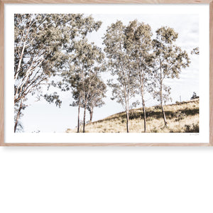 Gum Tree Hill