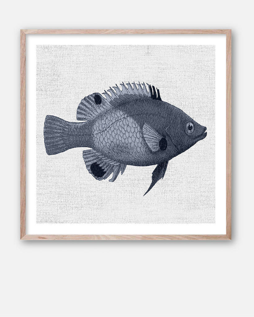 TROPICAL FISH COLLECTION #1 * Contemporary hand painted artwork, fine art print
