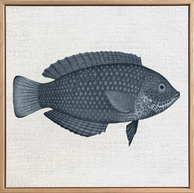 Tropical Fish Collection #4 Canvas Art | Artwork by Wall Style