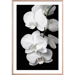 ORCHID BLISS #1 * Photographic floral interior wall art fine art print