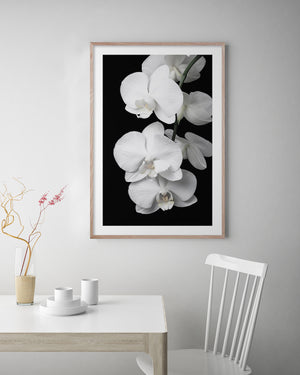 ORCHID BLISS #1 * Photographic interior wall art, fine art print