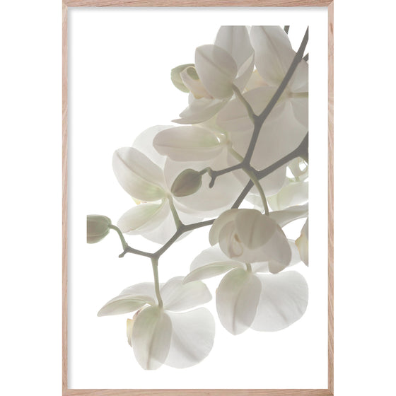 ORCHID LIGHT #2 * Floral photographic interior wall art, fine art prin