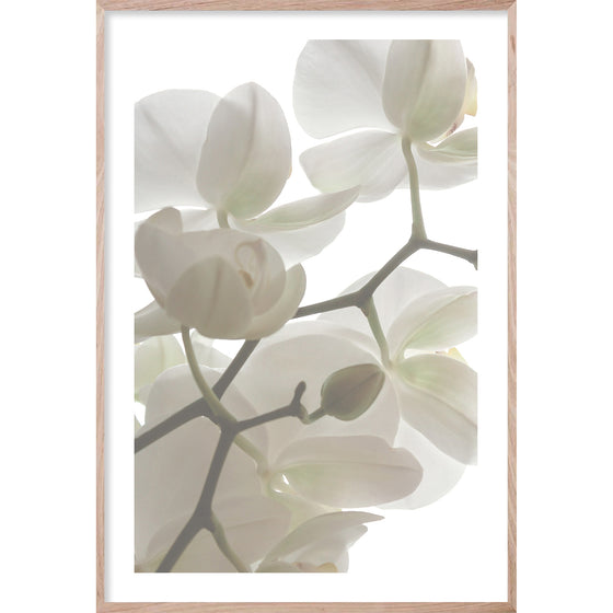 ORCHID LIGHT #3 * Floral photographic interior wall art, fine art print