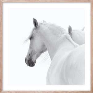 WHITE HORSE PAIR * Contemporary, photographic, fine art print
