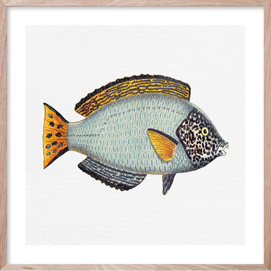 TROPICAL FISH 8 Contemporary hand-painted, coastal fine wall art print