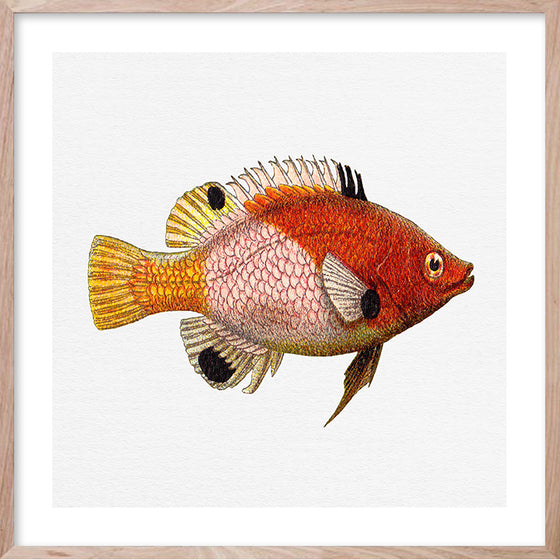 TROPICAL FISH 5 Contemporary hand-painted, coastal fine wall art print