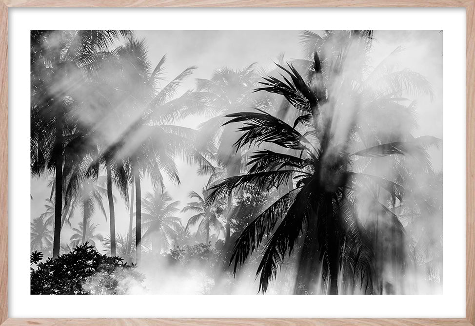 SHADOW & LIGHT #1 * Palm Sunrise Collection
