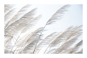 Pampas Breeze #1 * Beach Style, fine art print of pampas grass