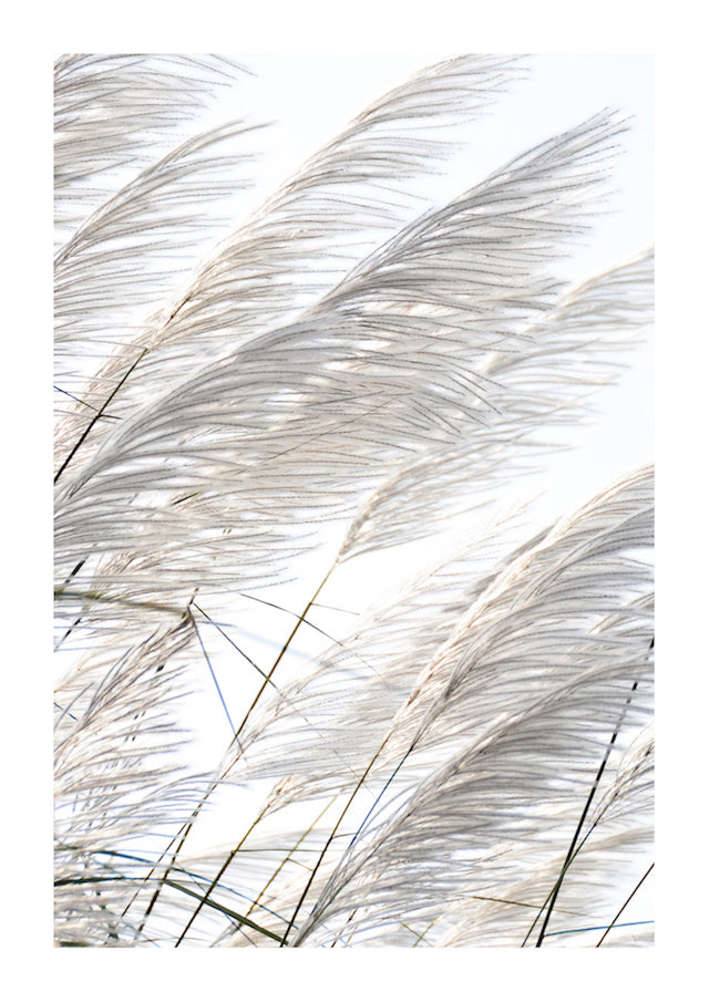 PAMPAS BREEZE #2