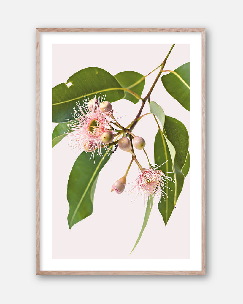 EUCALYPTUS DREAMING #3 * Contemporary Australian Native Botanical Art Print