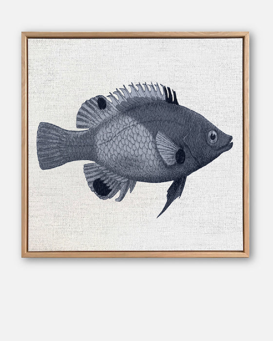 Tropical Fish Collection #1 Canvas Art | Artwork by Wall Style