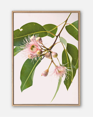 Eucalyptus Dreaming #3 |  Contemporary Australian Gum Flower Canvas Art | Art by Wall Style