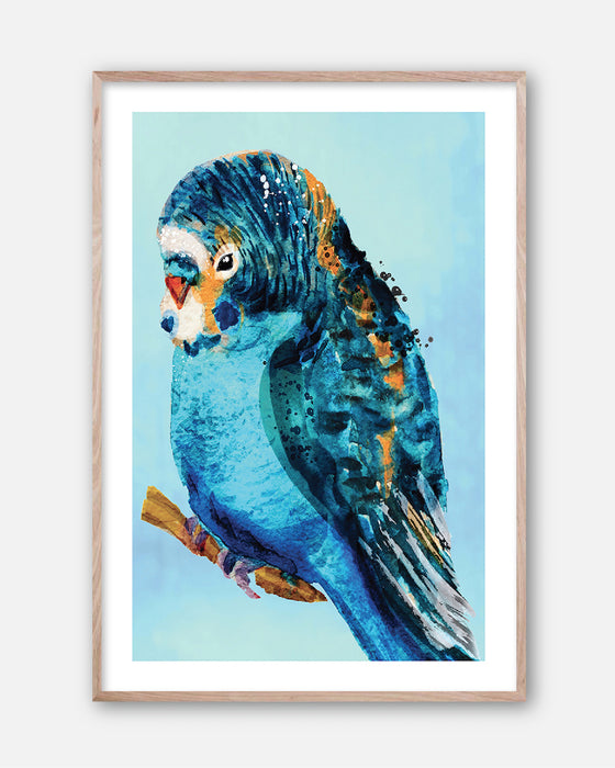 BLUE BUDGIE #2