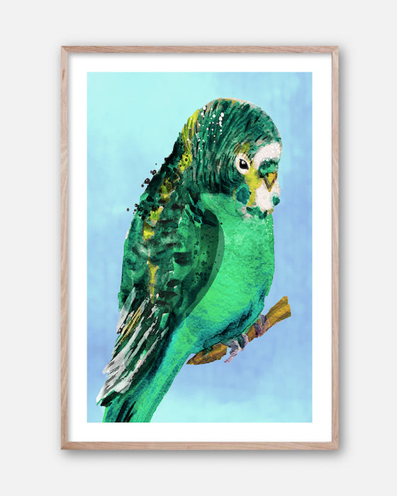 GREEN BUDGIE #1