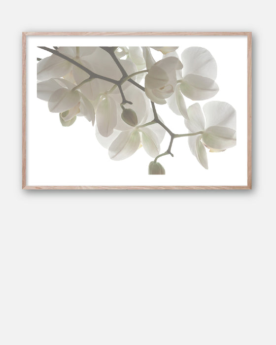 ORCHID LIGHT #1 * Floral photographic interior wall art, fine art print