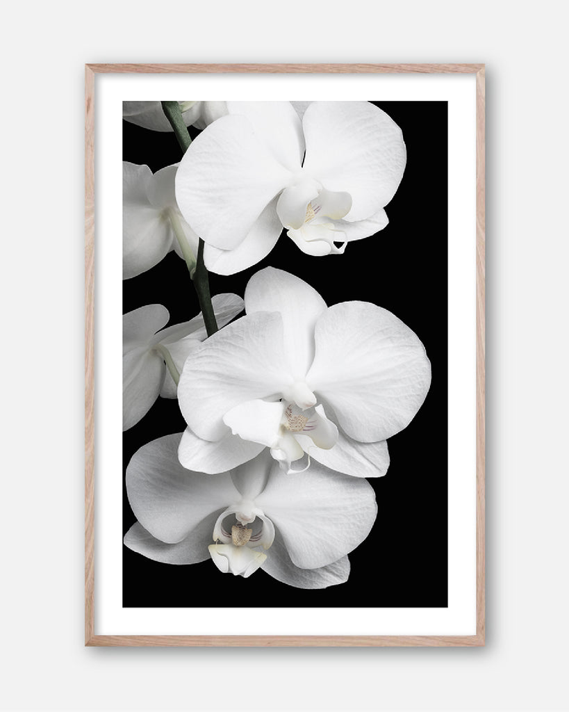 ORCHID BLISS #2