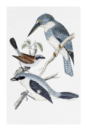 Regent Bird Collection #2 * Hand painted blue bird wall art